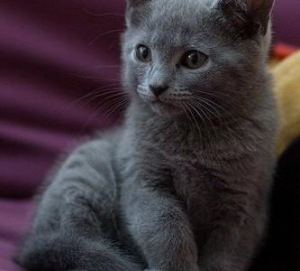 Iubitorii de animale adora a aibe langa ei o pisica sau un caine. Cele mai iubite si intalnite animale sunt cainii si pisicile, din categoria animalelor domestice. Foarte multa lume […]