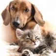 Pentru cei care nu cred sau nu au cunoscut inca, un animal de companie este cel care iti poate schimba viata. Nu numai ca te supune unei incercari de a […]