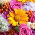 Femeiele sunt in general innebunite dupa flori, dar anumite flori au o semnificatie aparte pe care majoritatea nu o stiu. Crizantemele sunt cele mai indragite flori ale toamnei. Ele au […]